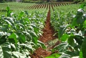 आजादी का सपना तब पूरा होगा, जब किसान होंगे खुशहाल