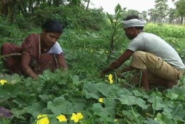 वीडियो कांफ्रेंसिंग के जरिए कृषि मंत्री ने केवीके प्रतिनिधियों से सीधी बातचीत की
