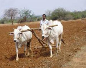 farmer-nnn