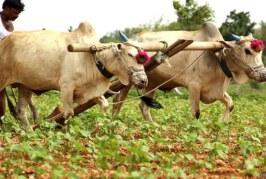 खेतों में बीज डालने से पहले बीजोपचार अति आवश्यक
