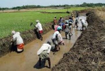 मनरेगा में रोजगार की बढ़ी मांग..चल रही है गाजे—बाजे के साथ