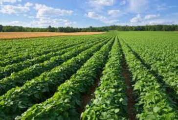 जिले में रबी की तैयारी जोरों पर, 107.2 हजार हेक्टेयर में होगी फसल बुआई
