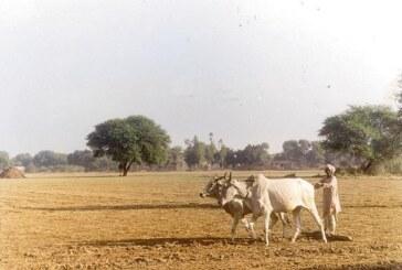 रबी की बुआई पर विमुद्रीकरण का कोई असर नही :  राधा मोहन सिंह
