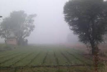 कोहरे की चादर ने बढ़ाई दलहन किसानों की परेशानी, बरतें सावधानी