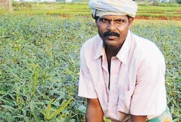 नोटबंदी से किसानों की आमदनी घटेगी..छोटे किसानों पर अधिक असर