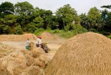 नोट की चोट बीच बेबस किसान…आफत में धान और रबी की बुआन