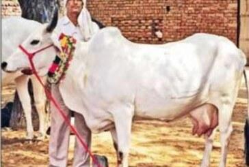 बढ़ा दुग्ध उत्पादन, गौ पालन से बड़ी किसानों की आमदनी