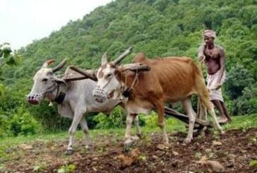 बाजार बदल गया,लेकिन किसान की किस्मत नहीं