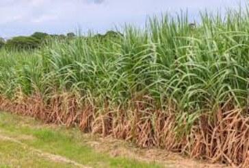 गन्ना किसानो के हित में उठाया गया कदम