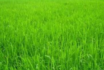 ऐसे बदल रही है खेती की तस्वीर