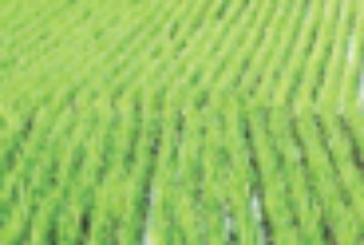 बिहार में सियासत चली खेत की ओर