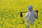 हरियाणा के किसान आनलाइन के चक्कर में नहीं बेच पा रहे अपनी फसल