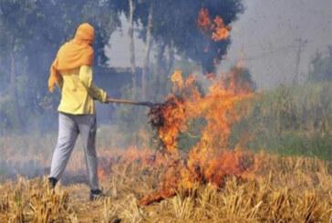 पराली की समस्या से निपटने के लिए हरियाणा सरकार किसानों को देगी 80 प्रतिशत सब्सिडी