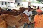 उत्तर प्रदेश में गोपालक योजना बदल रही है किसानों की तक्दीर