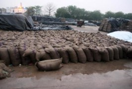 सरकार की बेरुखी से हजारों टन गेहूं बर्बाद