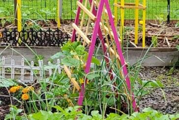 एक इंजीनियर की रूफ गार्डन में गुलजार होता जीवन और खिलखिलाते पौधे