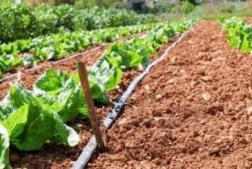 सब्जियों में सिंचाई