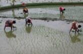 अन्नदाताओं के लिए आफत बनी कोरोना के बीच राहत देती एमएसपी में बढ़ोतरी की खबर