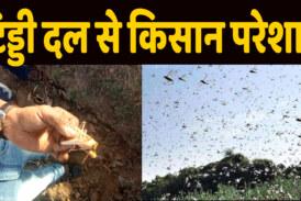 टिड्डी दल से बचाव को खेत की ओर दौड़े किसान,शाषण भी हाई अलर्ट पर