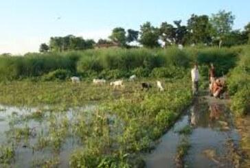 फसल बीमा के लाभ से वंचित हैं किसान..जमीं पर नहीं दिख रहा फायदा