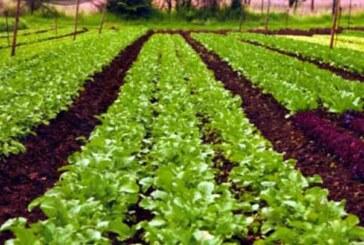 देश भर में जैविक कृषि को बढ़ावा दे रही है सरकार: राधामोहन सिंह