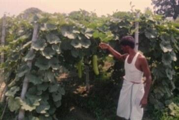 मेड़ बनाकर करें सब्जी की खेती..होगा फायदा
