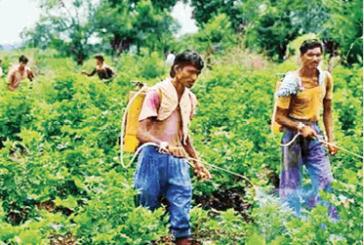अब जैविक कीटनाशक बचाएंगे फसलों को