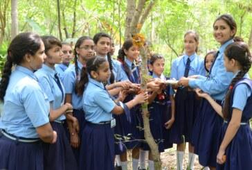 पिपलांत्री गांव में बेटियों के जन्म पर लगाए जाते हैं पौधे…