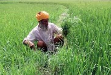किसान मोर्चा के अध्यक्ष वीरेन्द्र सिंह मस्त ने कहा कर्ज माफी किसानों की समस्या का समाधान नहीं