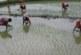 किसानों से दिनदहाड़े डकैती करते नकली खाद—बीज विक्रेता